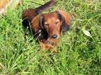 Что делать если потерялась собака