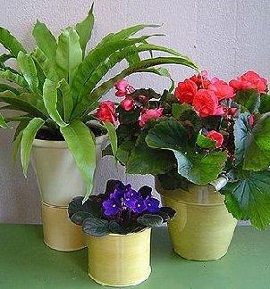 Какие цветы полезно держать в доме