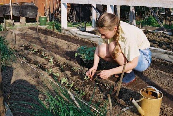 Как научить детей любить работу на даче