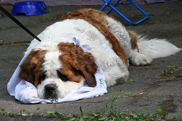 Страх перед собаками – как его победить?