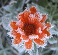 Цветы из снега и льда для украшения двора