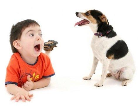 Как вырастить щенка если в доме ребенок