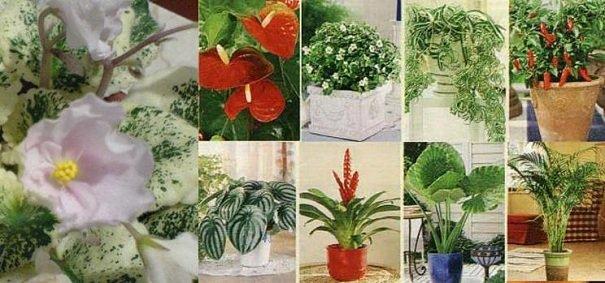 Купить землю для комнатных цветов
