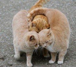 Любовь на троих