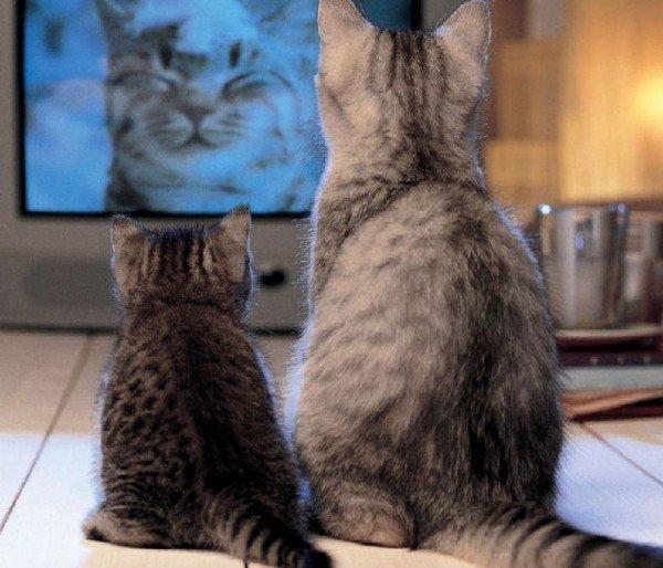 Что делать, если телевизор отнимает все свободное время?