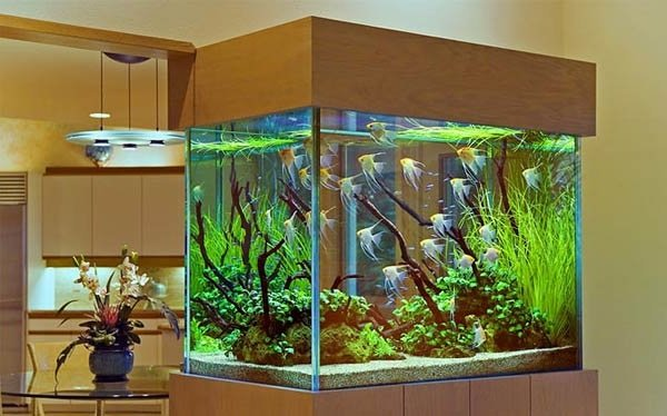 Если ребенок просит аквариум и рыбок