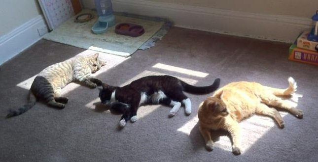 Как правильно загорать под солнцем
