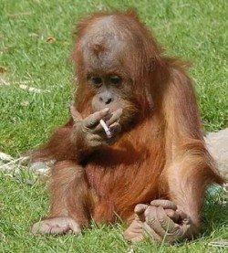Как отражается курение родителей на ребенке
