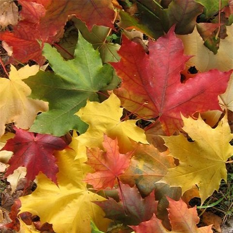 Осенняя хандра - как не грустить осенью