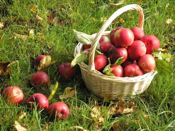 Самые полезные продукты питания - яблоки