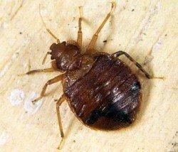 уничтожение насекомых-вредителей