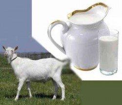 Козье молоко - польза для всей семьи!