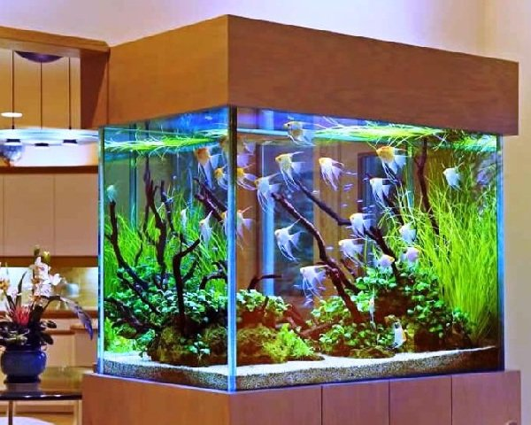 120 литровый аквариум в комнате