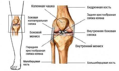 Болит нога под коленом - причины и лечение