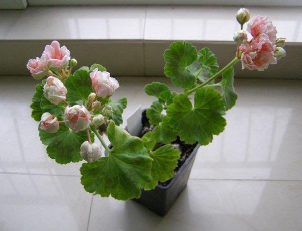 Комнатные цветы и растения для повседневной жизни.