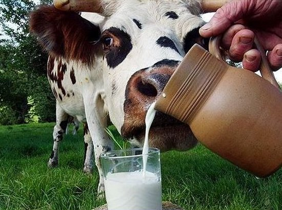 Молоко - это еда и напиток для здоровья.