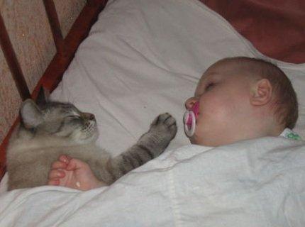 Новорожденный ребенок и животное в доме.
