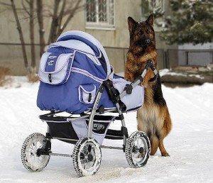 Новорожденный ребенок и животные в доме
