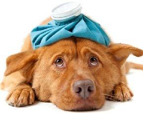 Как снять головную боль без лекарств
