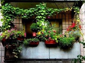 Озеленение балкона своими руками