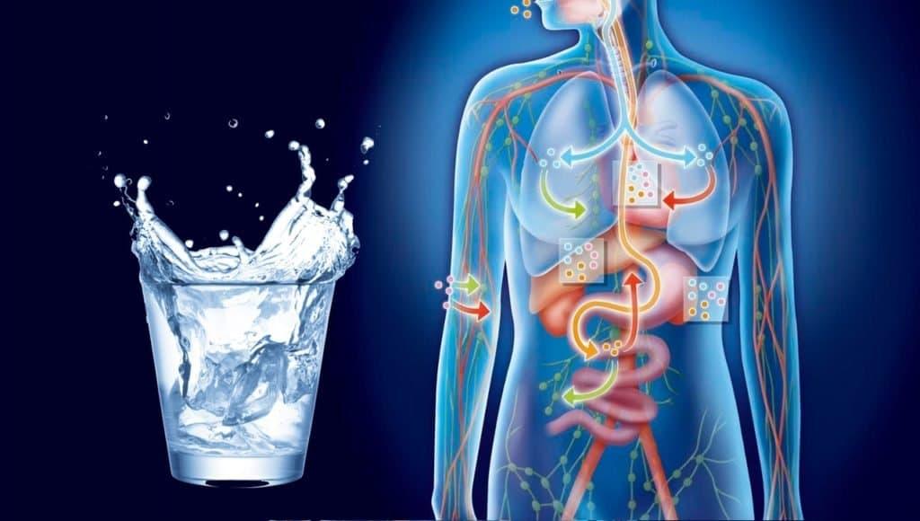 Выведение жидкости из организма – способы и советы.
