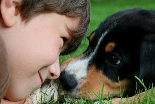 Ребенок просит собаку – что делать?