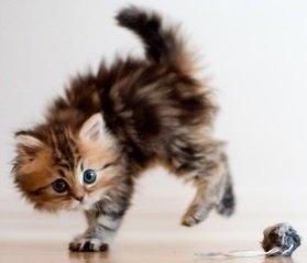 Что нужно для котенка купить