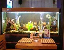 Изготовление и оформление аквариумов