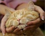 Особенности по уходу за кошкой