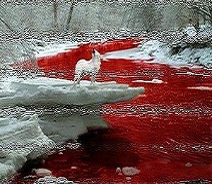 Кровь не вода, проливаясь на землю...