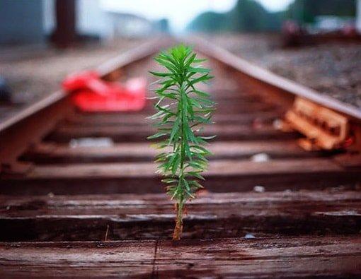 Самосовершенствование как путь развития