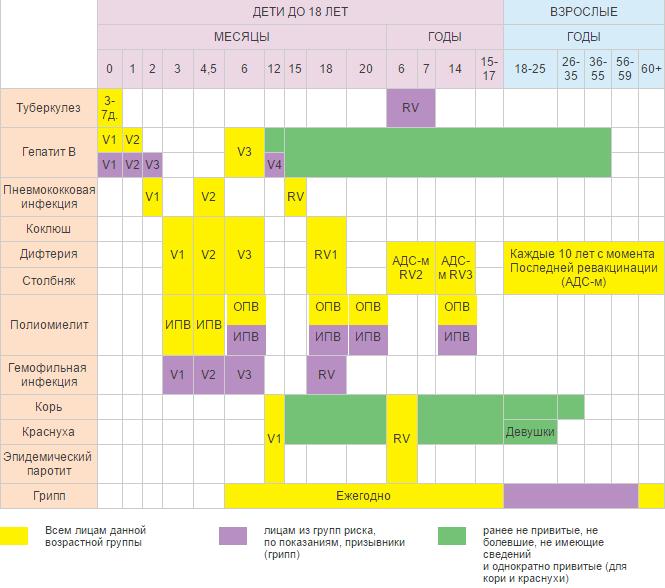 Календарь прививок детям и взрослым. Россия.