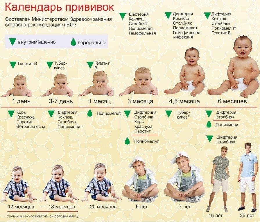 календарь прививок 2016 россия таблица