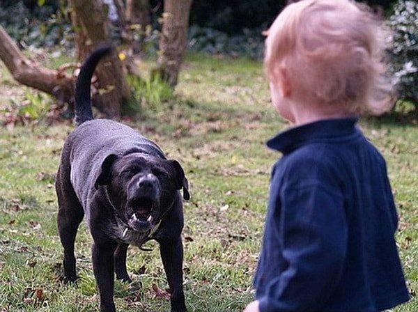 Укусила собака – ребенка или взрослого, что делать?