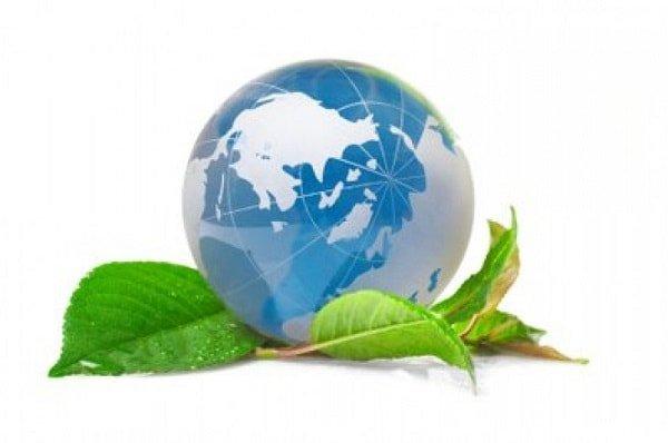 Воспитание экологической культуры
