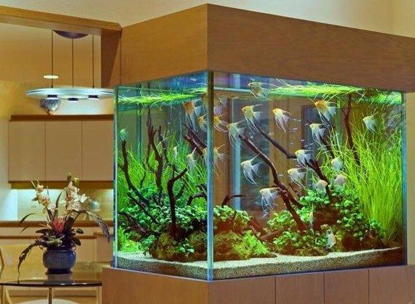 Что делать с аквариумом, если нужно надолго уехать в отпуск