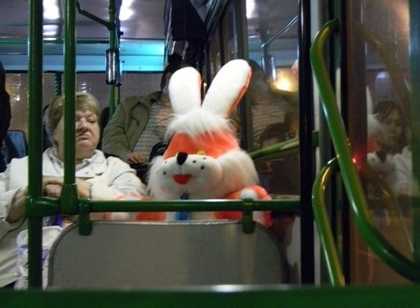 Кому положены льготы на проезд в общественном транспорте