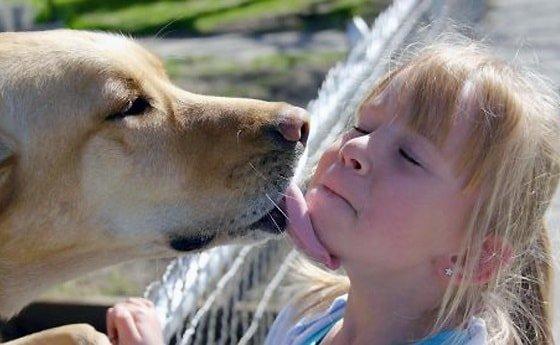 Чем может заразиться человек от кошек и собак