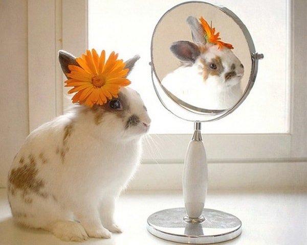 Коммунальное открытка, доброе утро картинки красивые животные с надписями