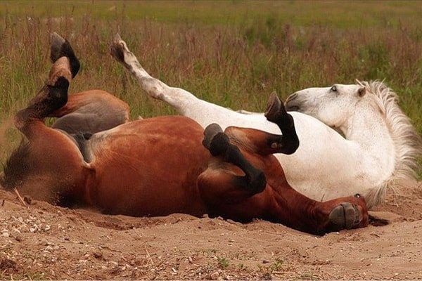 Сравнение человеческих и животных удовольствий