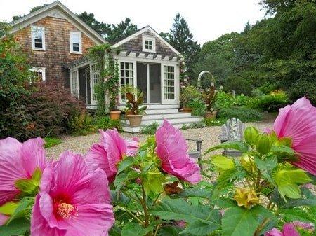 Гибискус садовый в дизайне сада
