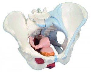 Болит лобковая кость болит лобковая кость 30 недель