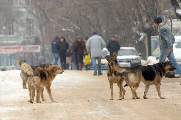 Укусила бродячая собака – что делать?
