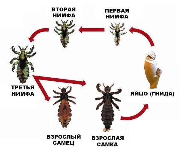 каким средством вывести паразитов из организма человека