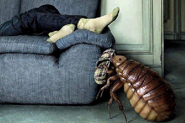 Борьба с клопами в квартире или доме, как избавиться?