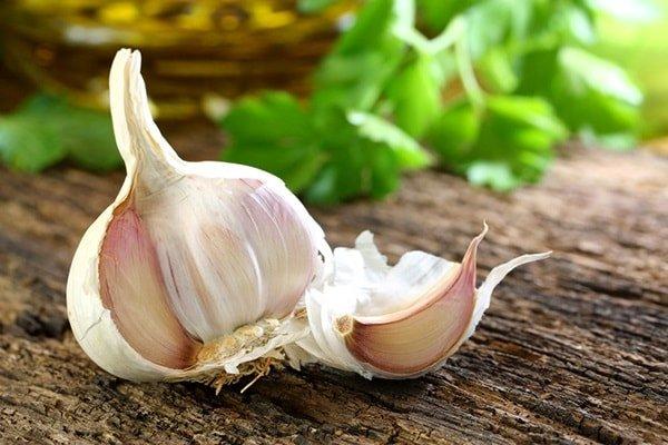 Полезные свойства чеснока для здоровья и красоты