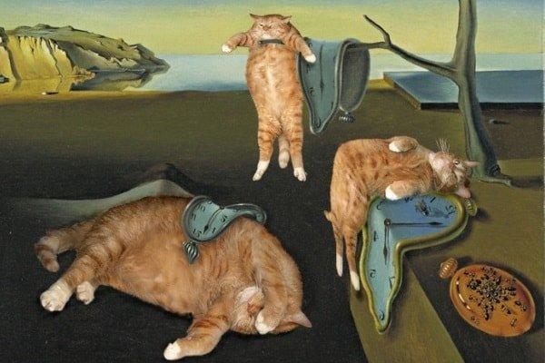 Прокрастинация жирного кота
