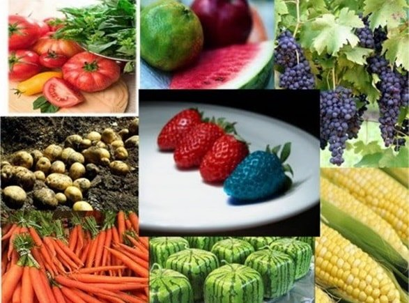Почему ГМО продукты опасны для человека?