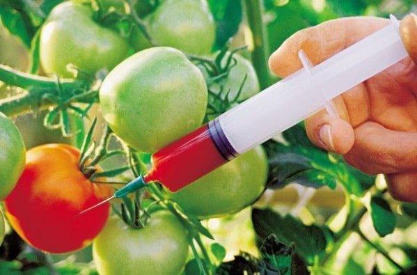 ГМО продукты опасны для здоровья человека