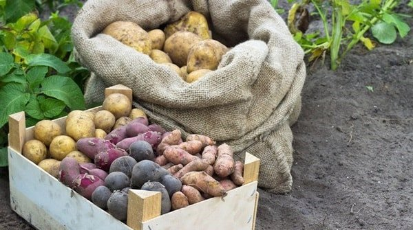 Как сохранить урожай до весны со всеми витаминами